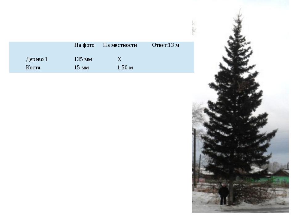 На фото На местности Ответ:13 м Дерево 1 135 мм Х Костя 15 мм 1,50 м