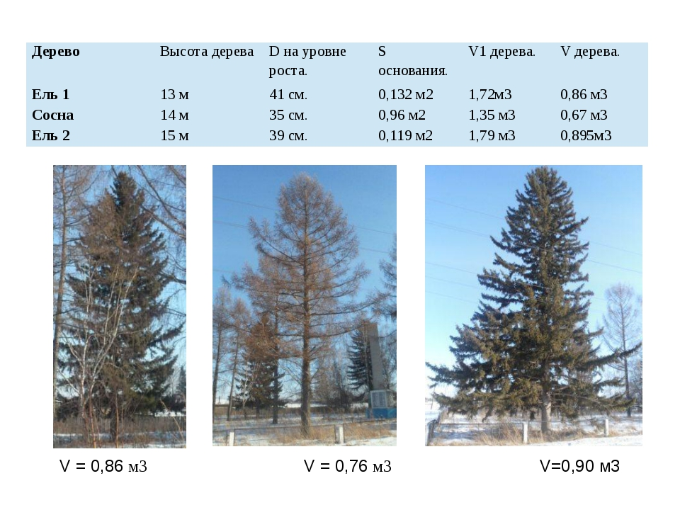 V = 0,86 м3 V = 0,76 м3 V=0,90 м3 Дерево Высота дерева Dна уровне роста. Sосн...