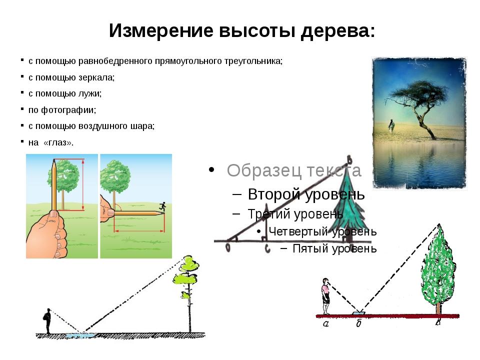 Измерение высоты дерева: с помощью равнобедренного прямоугольного треугольник...