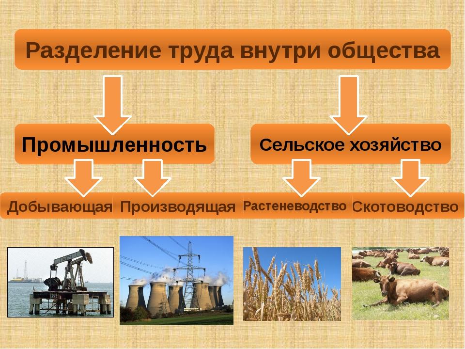 Скотоводство Растеневодство Разделение труда внутри общества Промышленность С...