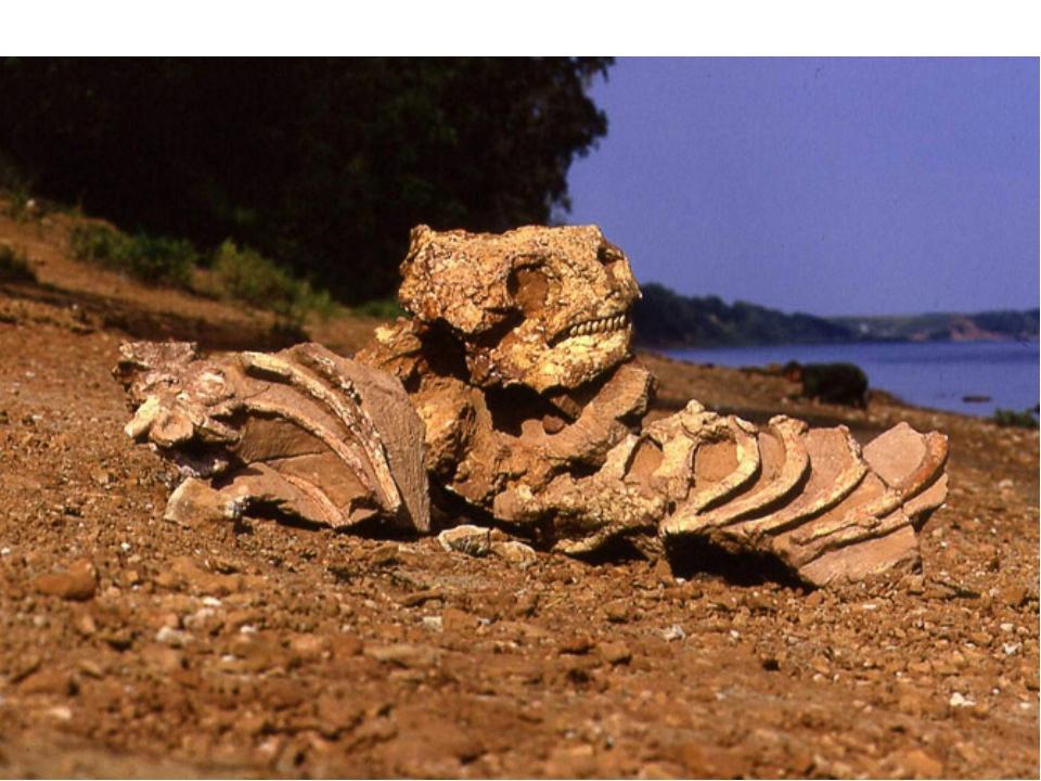 Парейазавры – крупные ящеры, имевшие костные выросты в щечной области черепа....