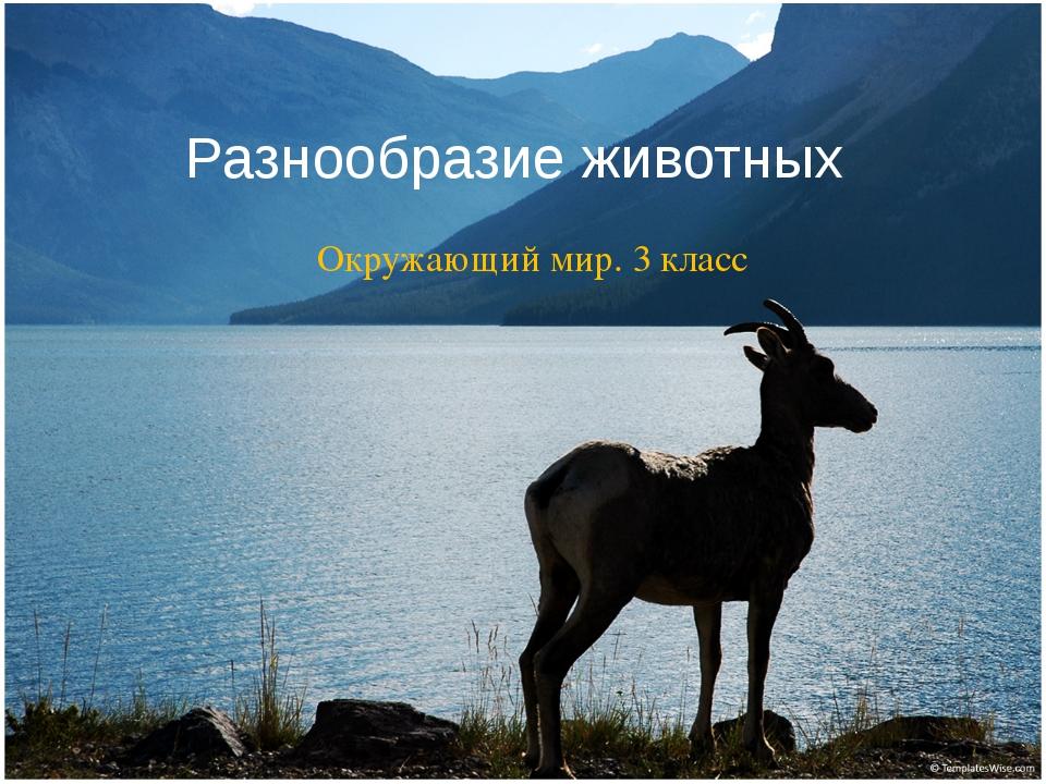 Разнообразие животных Окружающий мир. 3 класс