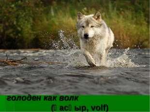 голоден как волк (қасқыр, volf)