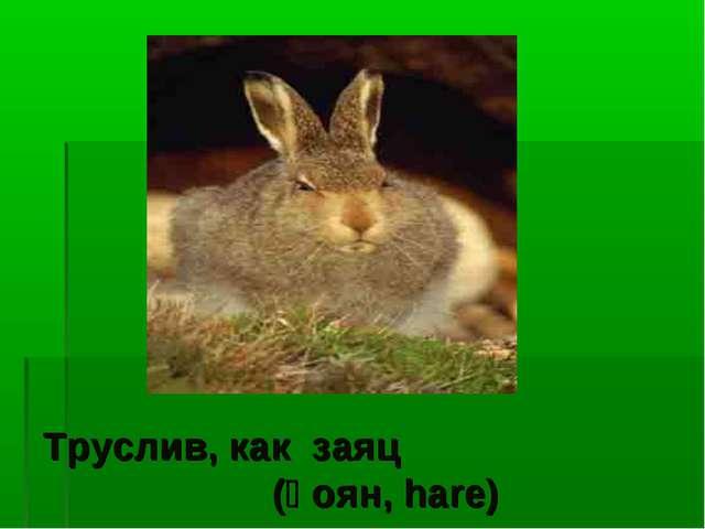 Труслив, как заяц (қоян, hare)