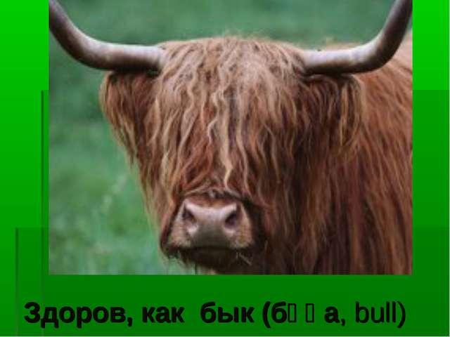 Здоров, как бык (бұқа, bull)