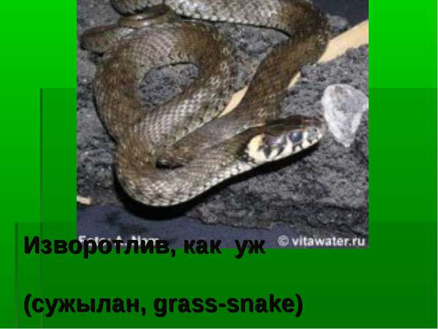 Изворотлив, как уж (сужылан, grass-snake)