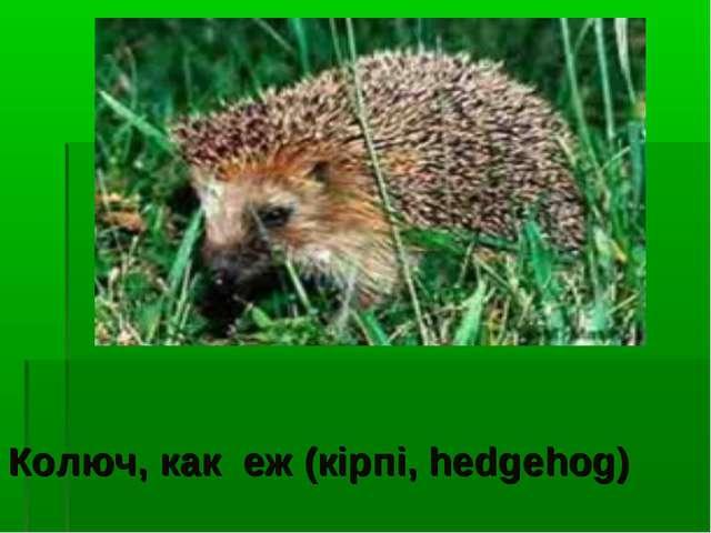 Колюч, как еж (кірпі, hedgehog)