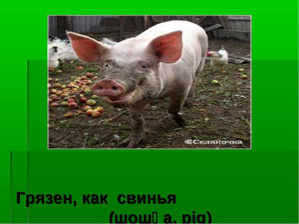 Грязен, как свинья (шошқа, pig)
