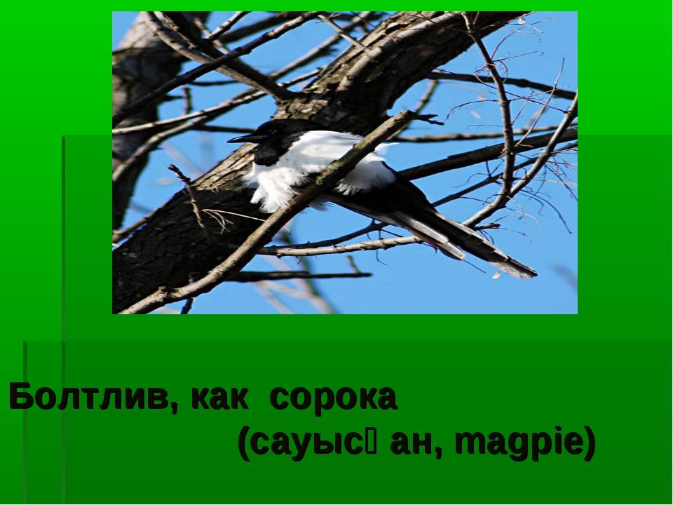 Болтлив, как сорока (сауысқан, magpie)