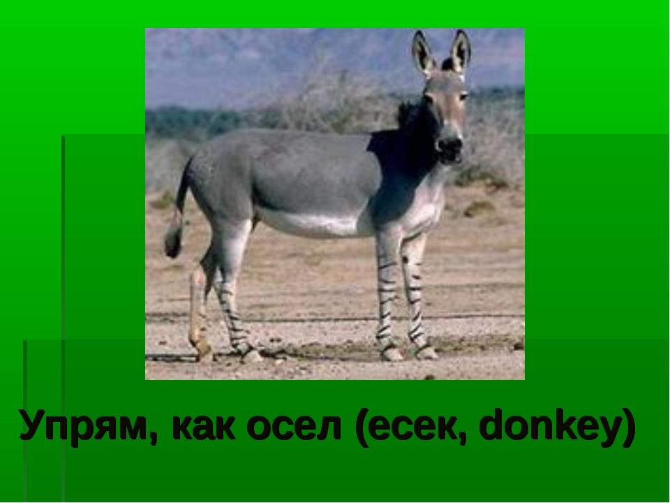 Упрям, как осел (есек, donkey)