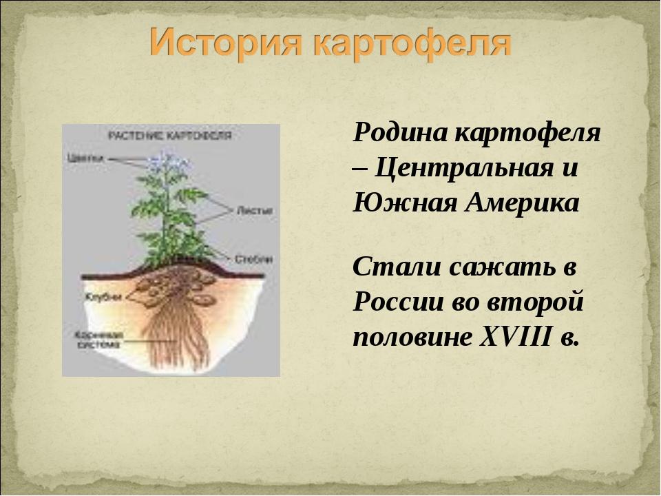 Родина картофеля – Центральная и Южная Америка Стали сажать в России во второ...