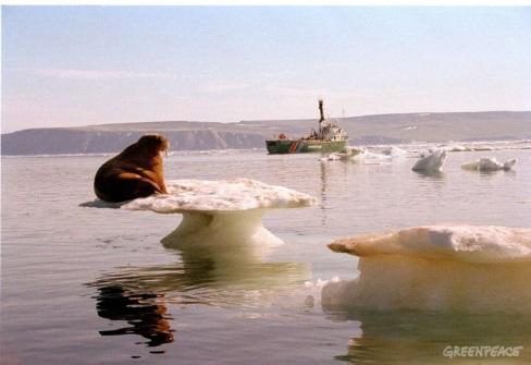 http://www.greenpeace.org/argentina/Global/argentina/image/2005/12/morsa-en-el-flujo-de-hielo-to.jpg