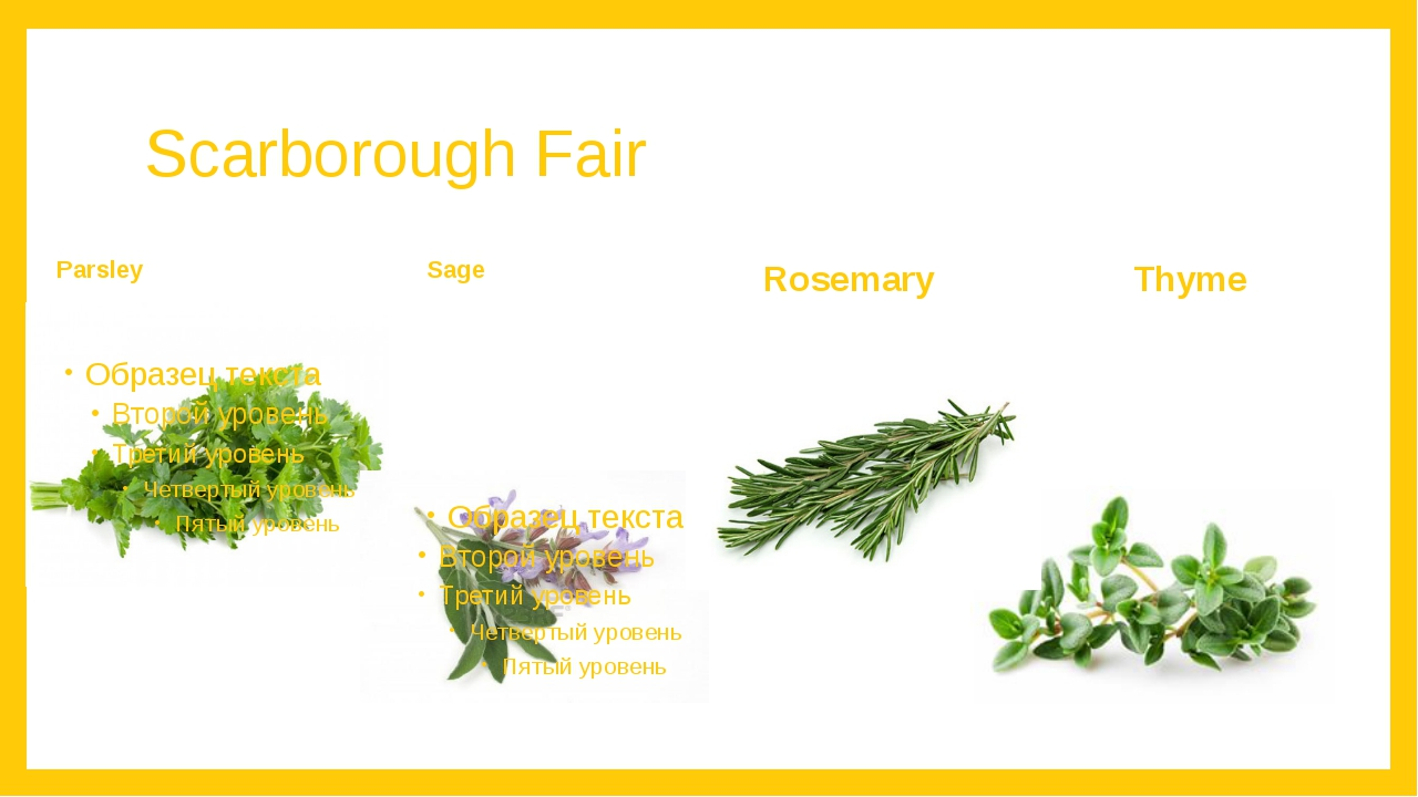 Scarborough Fair Parsley Sage Rosemary Thyme