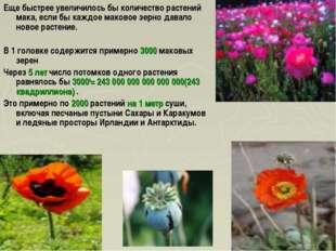 Еще быстрее увеличилось бы количество растений мака, если бы каждое маковое з