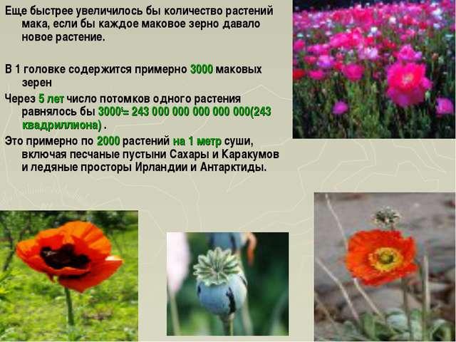 Еще быстрее увеличилось бы количество растений мака, если бы каждое маковое з...