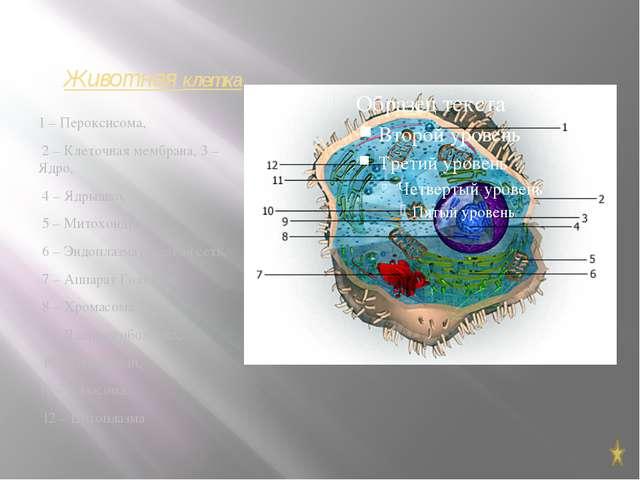 Растительная клетка 1- наружная клеточная мембрана 2-вакуоль 3-ядро 4-ядрышко...