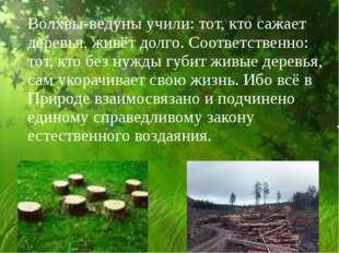 Волхвы-ведуны учили: тот, кто сажает деревья, живёт долго. Соответственно: т