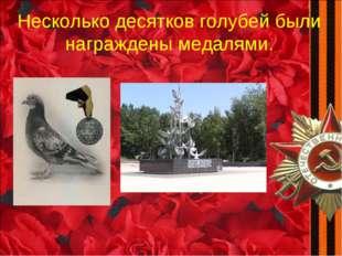 Несколько десятков голубей были награждены медалями.
