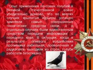 Опыт применения почтовых голубей в Великой Отечественной войне убедительно д