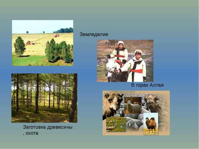 В горах Алтая Заготовка древесины , охота Земледелие