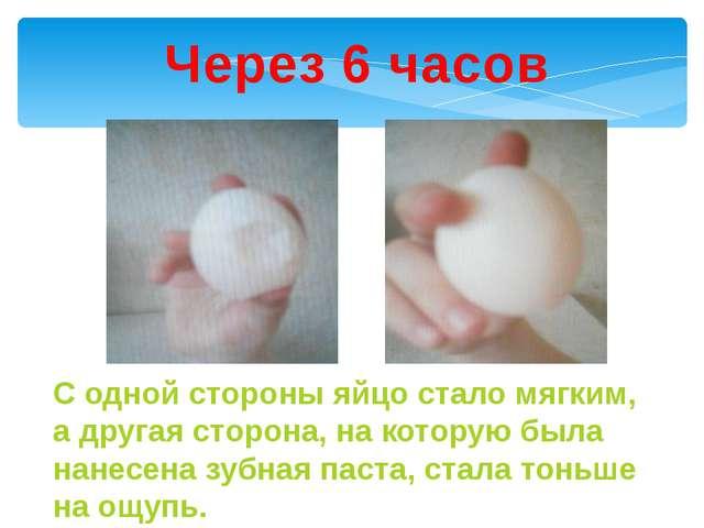 Через 6 часов С одной стороны яйцо стало мягким, а другая сторона, на которую...