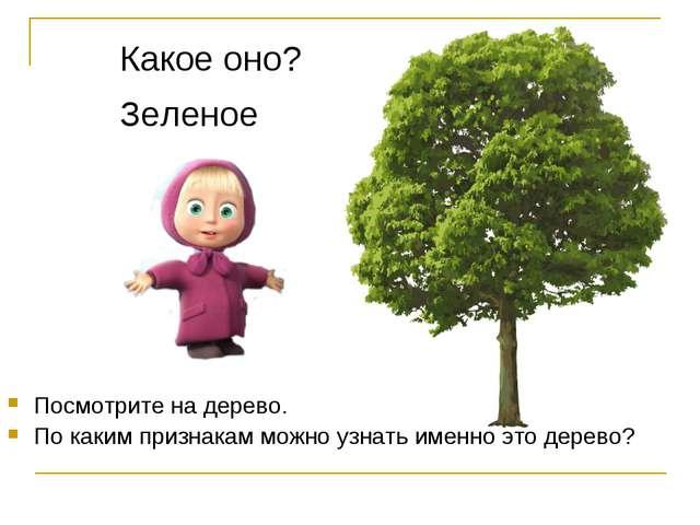 Посмотрите на дерево. По каким признакам можно узнать именно это дерево? Како...