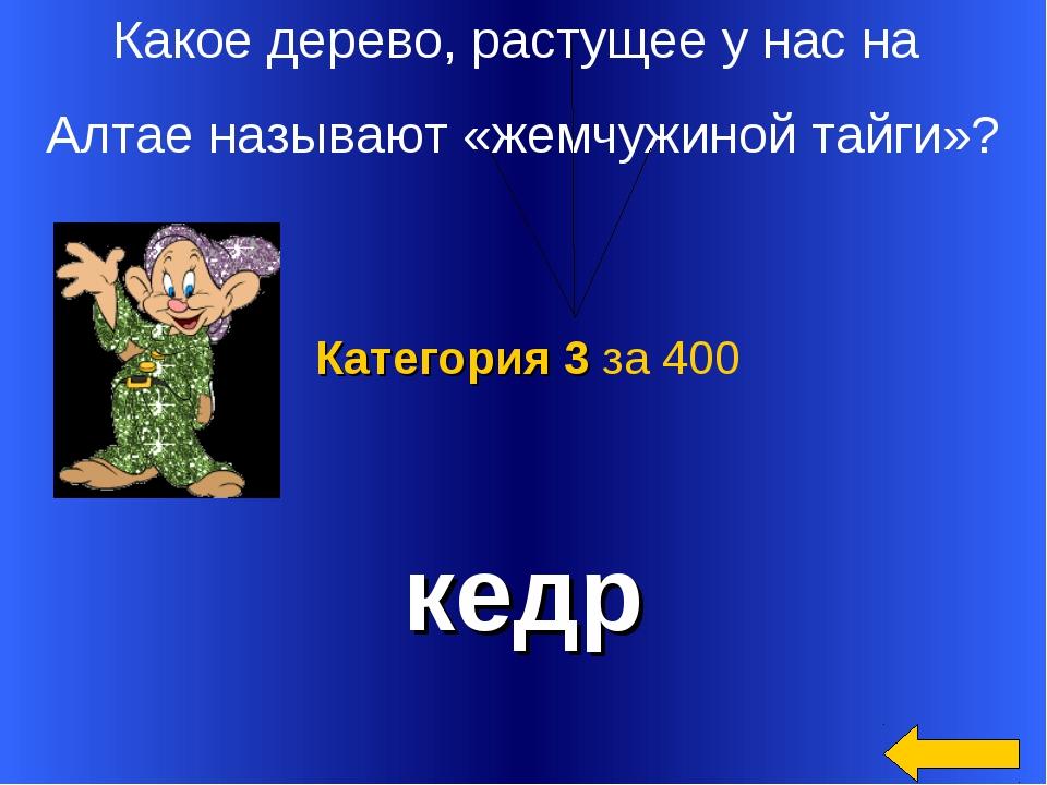 Какое дерево, растущее у нас на Алтае называют «жемчужиной тайги»? кедр Катег...