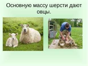 Основную массу шерсти дают овцы.