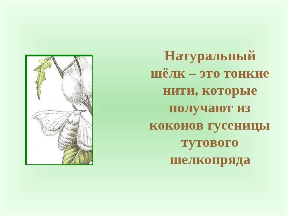 Натуральный шёлк – это тонкие нити, которые получают из коконов гусеницы туто...