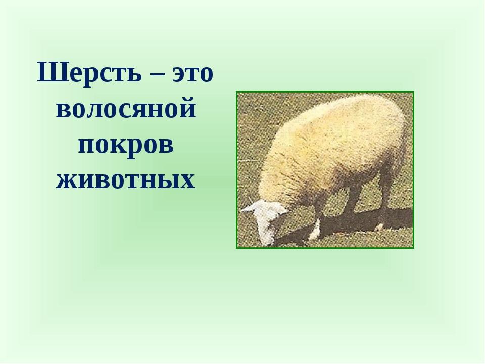Шерсть – это волосяной покров животных