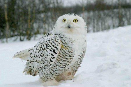 Вот как зимуют птицы и звери!