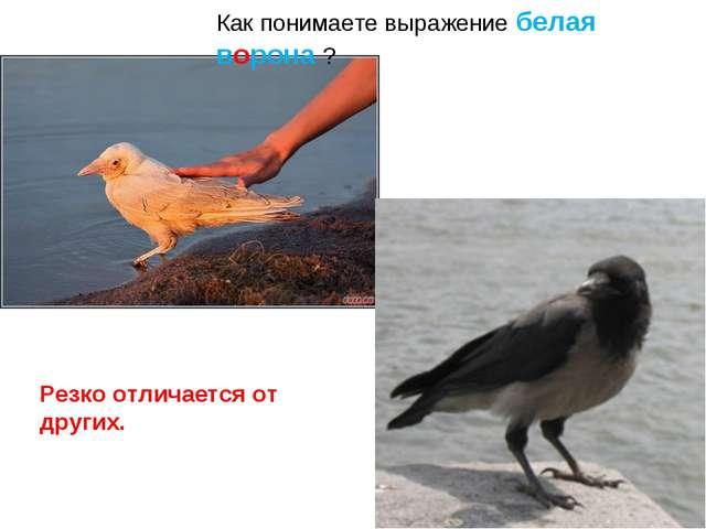 Как понимаете выражение белая ворона ? Резко отличается от других.