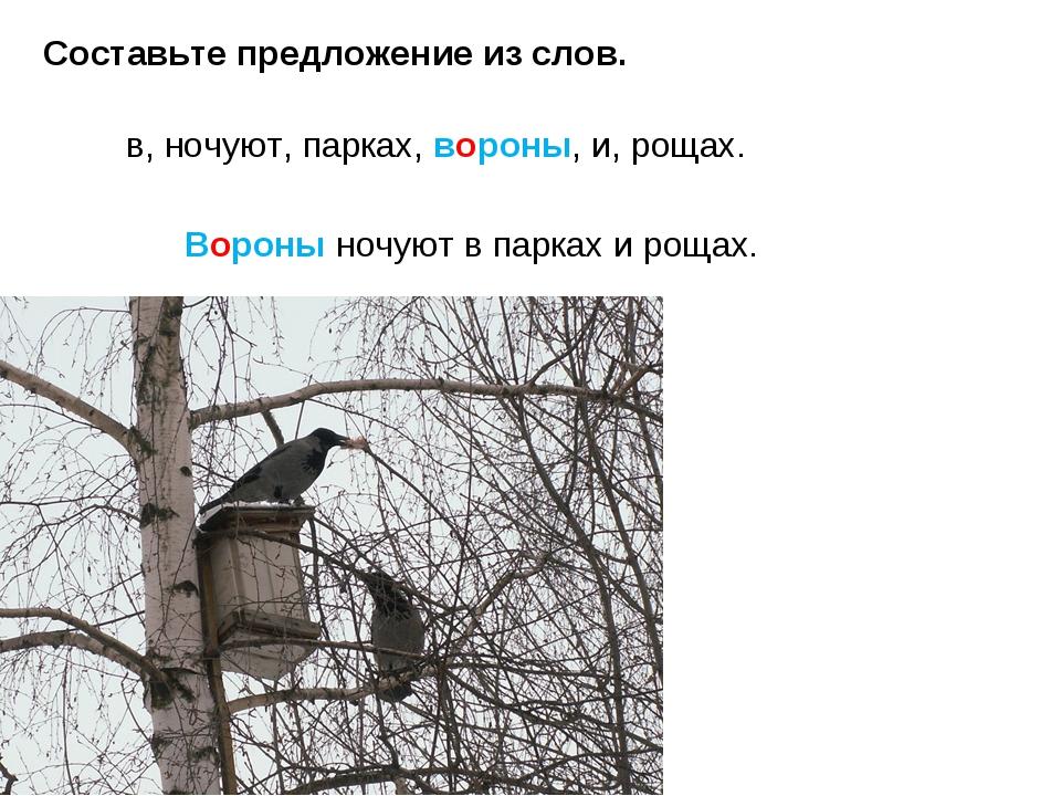 Составьте предложение из слов. в, ночуют, парках, вороны, и, рощах. Вороны но...