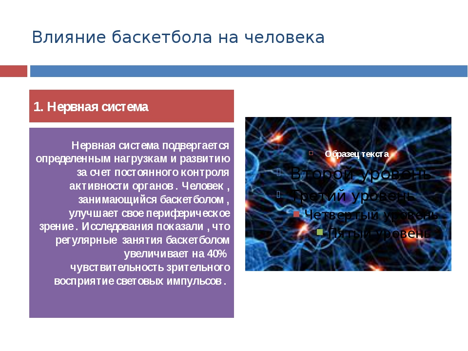Влияние баскетбола на человека 1. Нервная система Нервная система подвергаетс...
