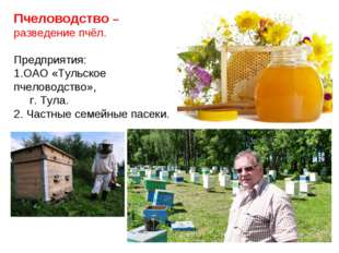 Пчеловодство –разведение пчёл. Предприятия: ОАО «Тульское пчеловодство», г. Т