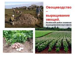 Овощеводство – выращивание овощей. Венёвский район знаменит выращиванием карт