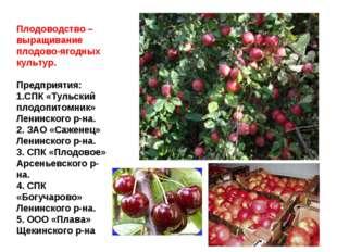 Плодоводство – выращивание плодово-ягодных культур. Предприятия: 1.СПК «Тульс