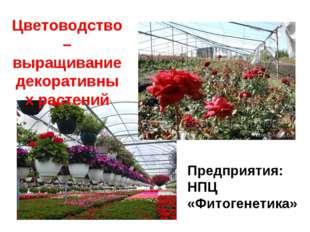 Цветоводство – выращивание декоративных растений Предприятия: НПЦ «Фитогенети