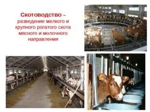 Скотоводство –разведение мелкого и крупного рогатого скота мясного и молочног
