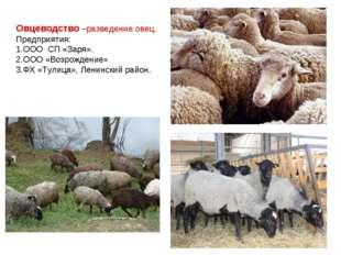 Овцеводство –разведение овец. Предприятия: ООО СП «Заря». ООО «Возрождение» Ф