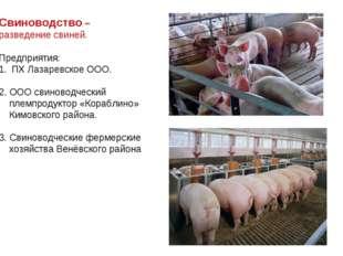 Свиноводство – разведение свиней. Предприятия: ПХ Лазаревское ООО. 2. ООО сви