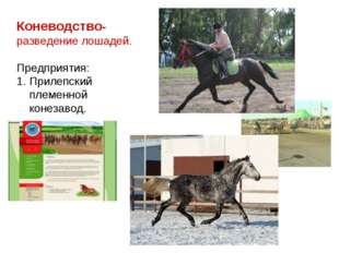 Коневодство- разведение лошадей. Предприятия: Прилепский племенной конезавод.