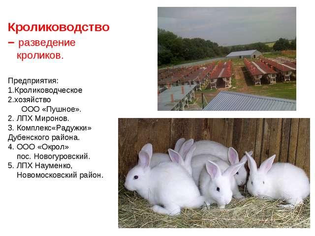 Кролиководство– разведение кроликов. Предприятия: Кролиководческое хозяйство...