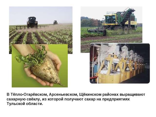 В Тёпло-Огарёвском, Арсеньевском, Щёкинском районах выращивают сахарную свёкл...