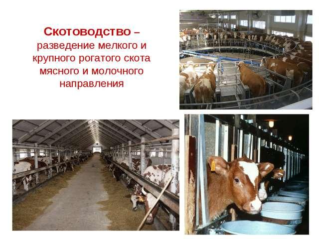 Скотоводство –разведение мелкого и крупного рогатого скота мясного и молочног...