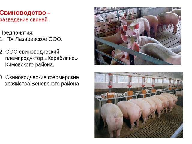 Свиноводство – разведение свиней. Предприятия: ПХ Лазаревское ООО. 2. ООО сви...