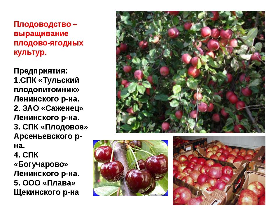 Плодоводство – выращивание плодово-ягодных культур. Предприятия: 1.СПК «Тульс...