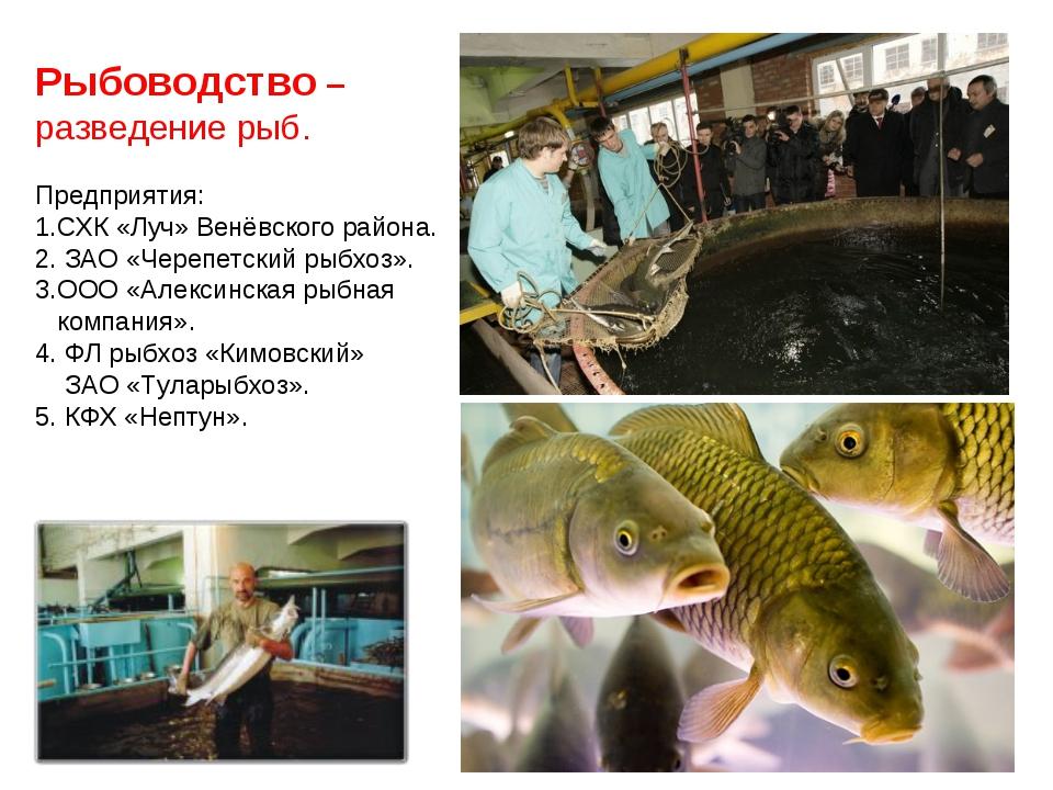Рыбоводство – разведение рыб. Предприятия: 1.СХК «Луч» Венёвского района. 2....