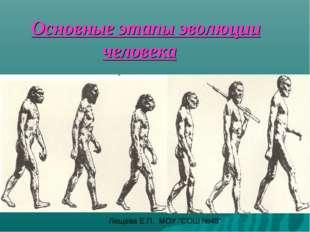 """Основные этапы эволюции человека Лещева Е.П. МОУ """"СОШ №48"""""""