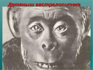 """Детеныш австралопитека Лещева Е.П. МОУ """"СОШ №48"""""""